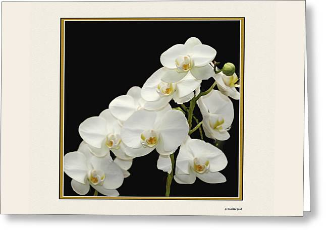 White Orchids II Greeting Card by Tom Prendergast