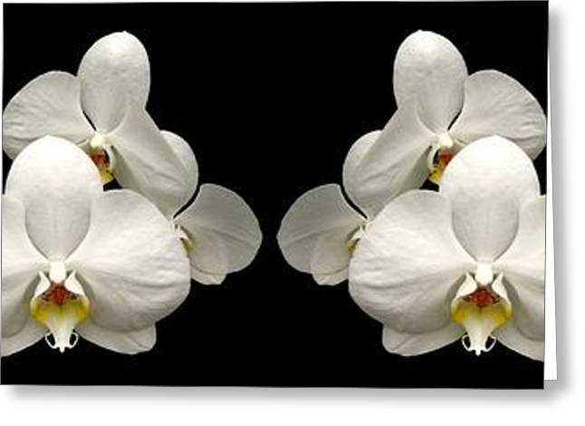Rose Petals Greeting Cards - White Orchids Panorama Greeting Card by Rose Santuci-Sofranko