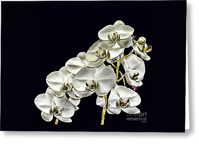 White Orchids Greeting Card by Tom Prendergast