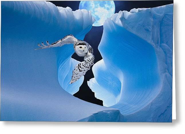 Night Hawk Greeting Cards - White Owl Greeting Card by Jack Zulli