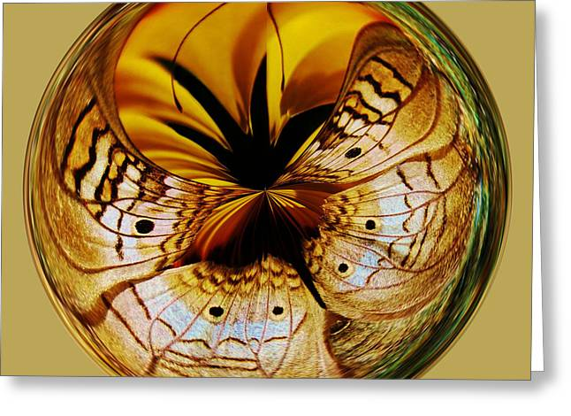 White Peacock Butterfly Orb Greeting Card by Paulette Thomas