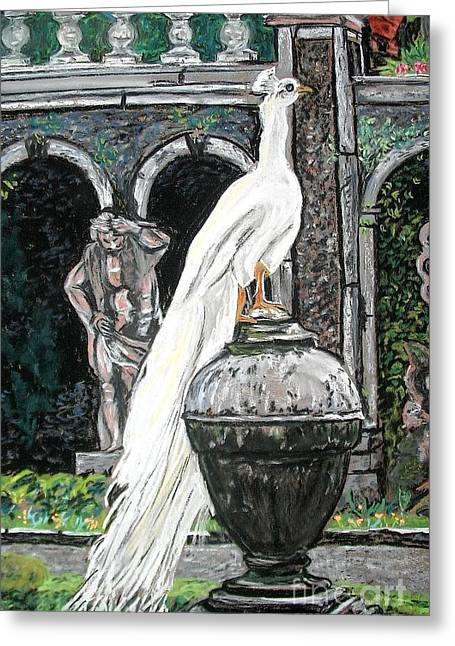 Castle. Birds Pastels Greeting Cards - White Peacock Greeting Card by Frank Giordano
