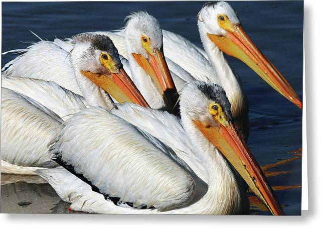 White Pelican Quartet, Summer Lake Greeting Card by Michel Hersen