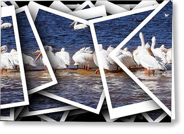 Cedar Key Greeting Cards - White Pelican Stack 1 Greeting Card by Sheri McLeroy
