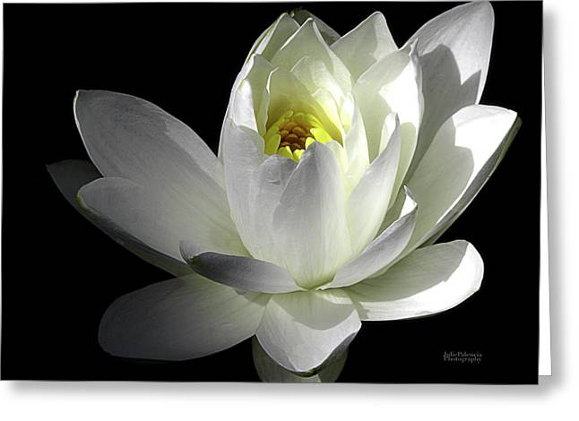 Nature Center Pond Greeting Cards - White Petals Aquatic Bloom Greeting Card by Julie Palencia