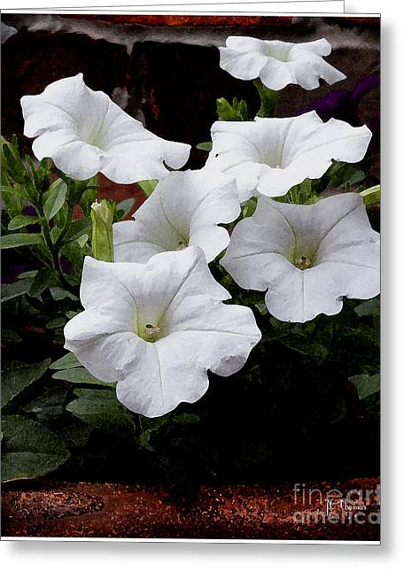 Flower Blossom Greeting Cards - White Petunia Flowers Greeting Card by James C Thomas