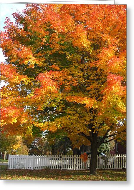 Photos Of Autumn Greeting Cards - White Picket Fence and Friend Greeting Card by Guy Ricketts