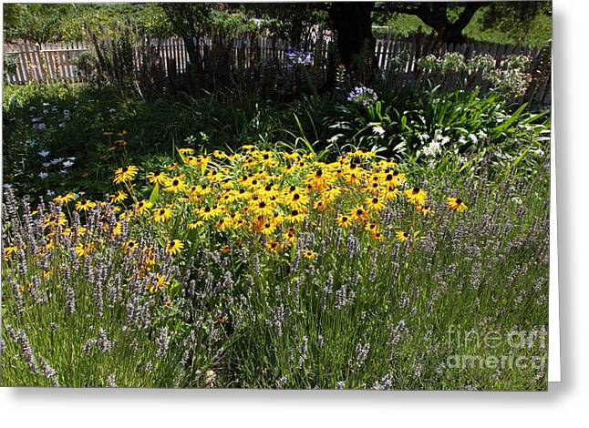 Bay Area Flowers Greeting Cards - White Picket Fence Garden At Historic Jack London Cottage in Glen Ellen California 5D24560 Greeting Card by Wingsdomain Art and Photography