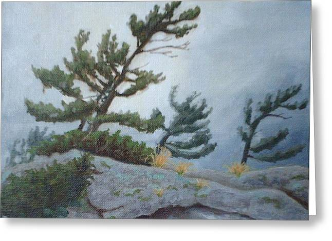 Paysage A L Greeting Cards - White Pine at the end of Summer - Pin a la fin dete Greeting Card by David Ormond