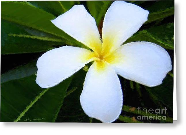 Hawaii Greeting Cards - White Plumeria Greeting Card by Anthony Fishburne