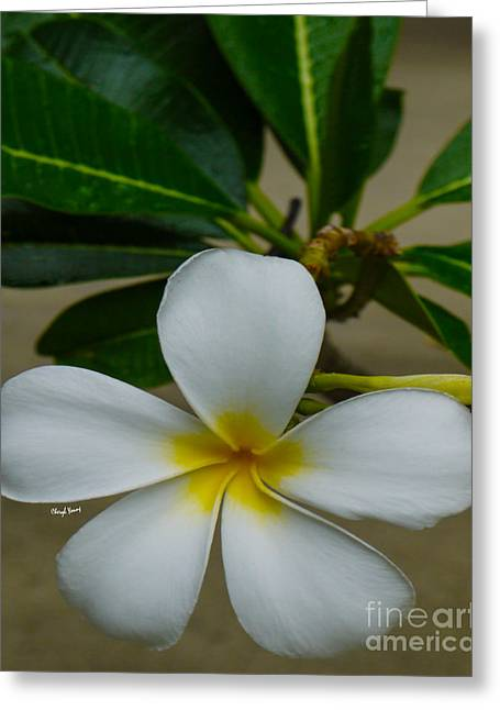 Lei Greeting Cards - White Plumeria Greeting Card by Cheryl Young