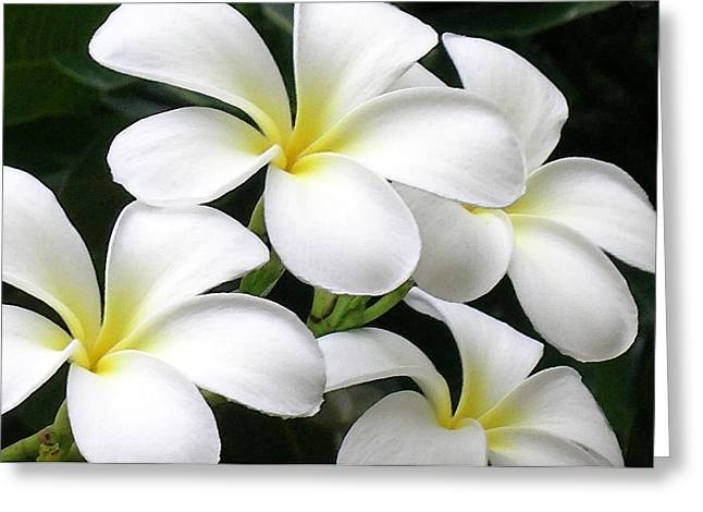 Tropical Island Greeting Cards - White Plumeria Greeting Card by James Temple