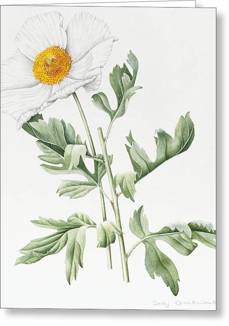 Yellow Leaves Greeting Cards - White Poppy Greeting Card by Sally Crosthwaite