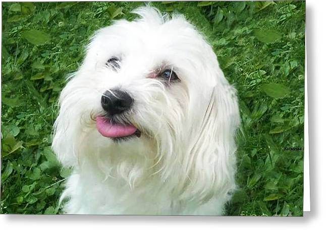 Virginia Postcards Greeting Cards - White Puppy Greeting Card by Katherine Williams