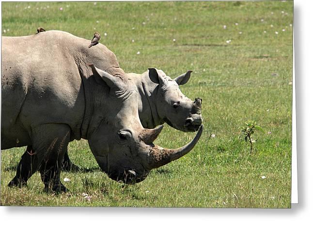 Rhinoceros Greeting Cards - White Rhino Mother And Calf Greeting Card by Aidan Moran