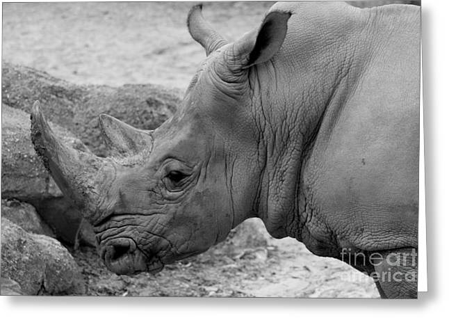 Rhinoceros Greeting Cards - White Rhino Greeting Card by Patti Whitten