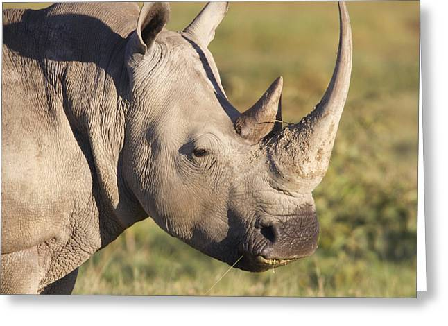 Rhinos Greeting Cards - White Rhino Portrait Greeting Card by Richard Garvey-Williams