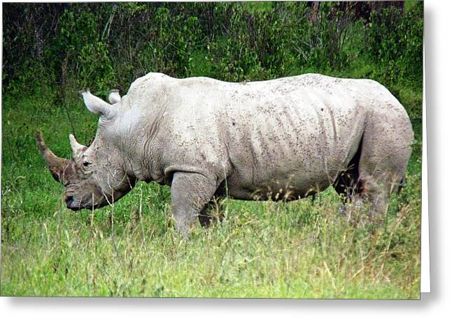 One Horned Rhino Greeting Cards - White Rhino Greeting Card by Tony Murtagh