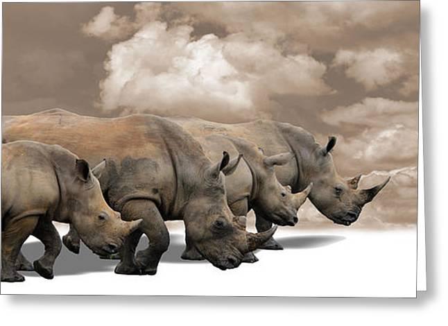 Rhinoceros Greeting Cards - White Rhino Walking Greeting Card by Bernhard Bekker