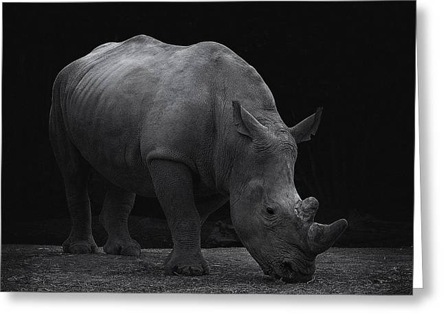 One Horned Rhino Greeting Cards - White rhinocero Greeting Card by TouTouke A Y