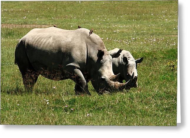 Rhinoceros Greeting Cards - White Rhinoceros Greeting Card by Aidan Moran