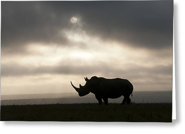 Recently Sold -  - Rhinoceros Greeting Cards - White Rhinoceros At Sunset Kenya Greeting Card by Tui De Roy