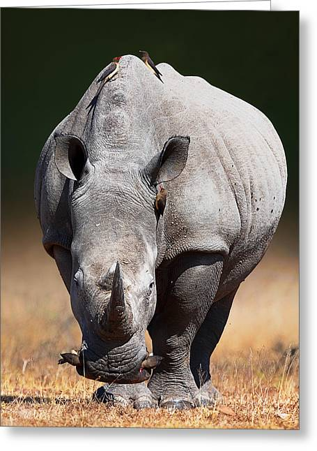 White Photographs Greeting Cards - White Rhinoceros  front view Greeting Card by Johan Swanepoel