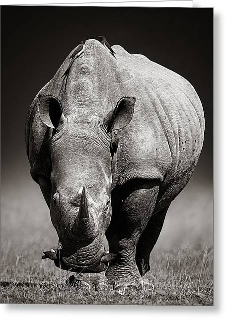 Angles Greeting Cards - White Rhinoceros  in due-tone Greeting Card by Johan Swanepoel