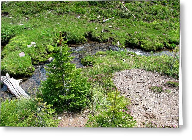 White River Greeting Cards - White River Pass Stream Greeting Card by Pam Little
