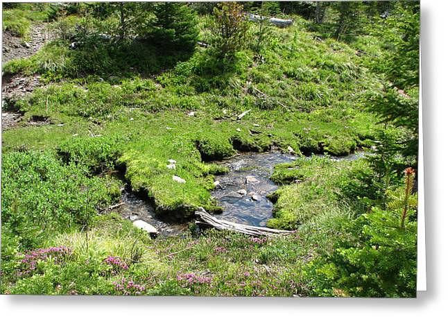 White River Greeting Cards - White River Pass Stream second view Greeting Card by Pam Little