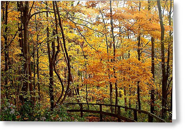 Autumn Jewelry Greeting Cards - White River Trail Greeting Card by BackHome Images