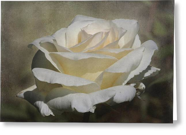 Enhanced Greeting Cards - White Rose 2 Greeting Card by Angie Vogel