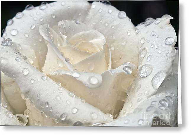 Eddie Yerkish Greeting Cards - White Rose After The Rain Greeting Card by Eddie Yerkish