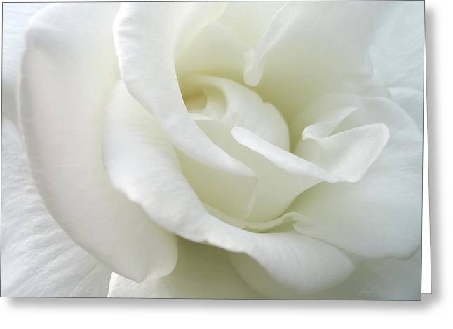 Macro Greeting Cards - White Rose Angel Wings Greeting Card by Jennie Marie Schell