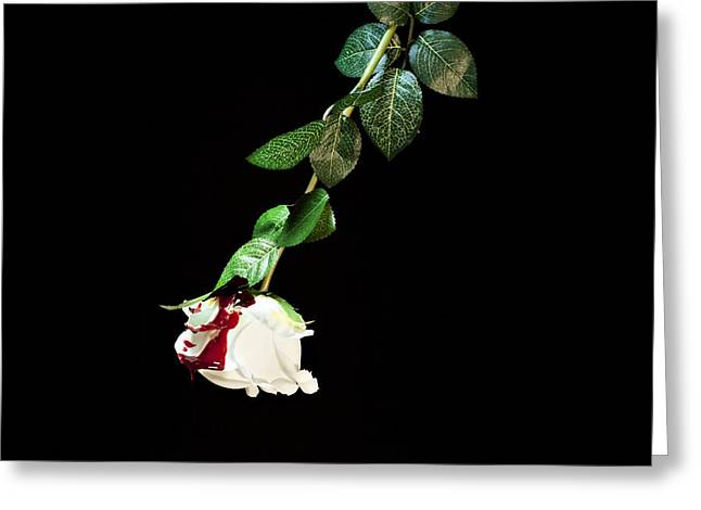 Dripping Rose Greeting Cards - White rose covered with blood Greeting Card by Gianfranco Grenar