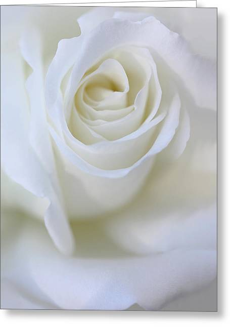 Ivory Greeting Cards - White Rose Floral Whispers Greeting Card by Jennie Marie Schell