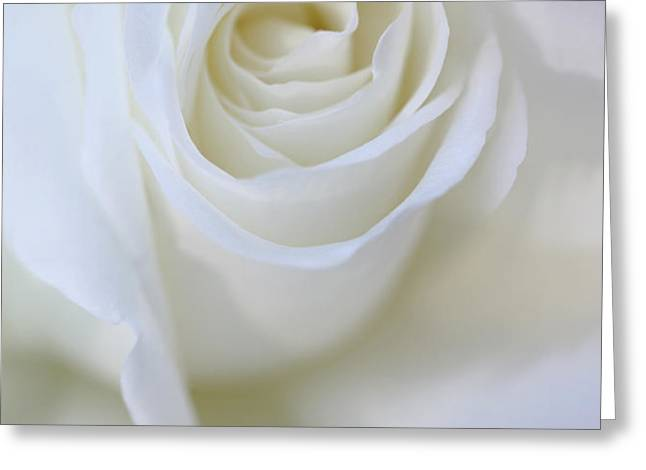 White Rose Floral Whispers Greeting Card by Jennie Marie Schell
