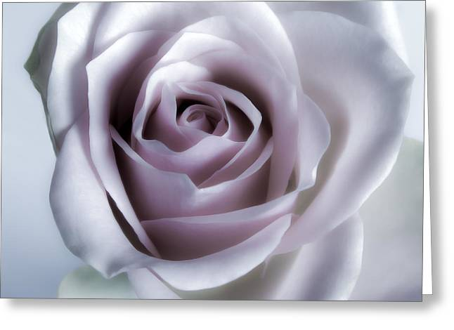 Flora Framed Prints Greeting Cards - White Roses Flowers Art Work Photography Greeting Card by Artecco Fine Art Photography