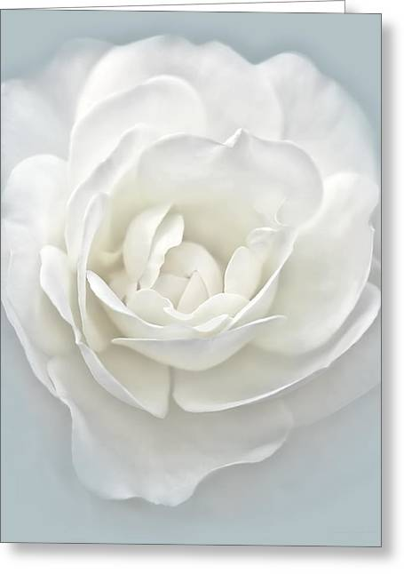 Rose Portrait Greeting Cards - White Rose Flower Silver Blue Greeting Card by Jennie Marie Schell