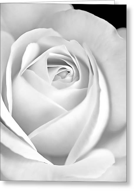 White Photographs Greeting Cards - White Rose in Black and White Greeting Card by Jennie Marie Schell