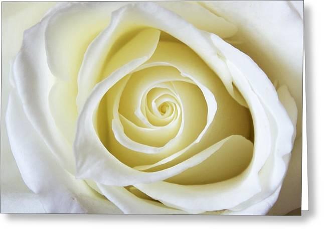 Jennifer Lamanca Kaufman Greeting Cards - White Rose Greeting Card by Jennifer Lamanca Kaufman