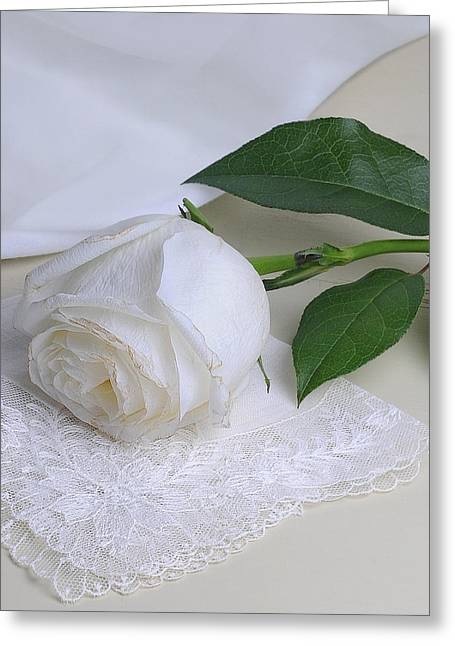 Quality Pyrography Greeting Cards - White Rose Greeting Card by Krasimir Tolev