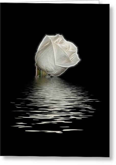 Indiana Roses Greeting Cards - White Rose on Black Greeting Card by Sandy Keeton