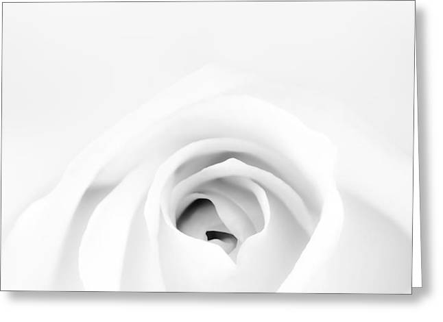 White Rose Greeting Card by Scott Norris