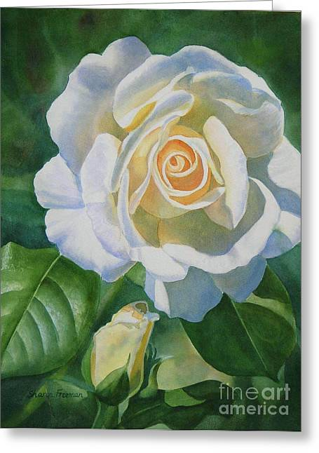 White Paintings Greeting Cards - White Rose with Bud Greeting Card by Sharon Freeman