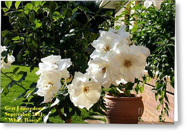 Commercial Photography Paintings Greeting Cards - White Roses H a Greeting Card by Gert J Rheeders