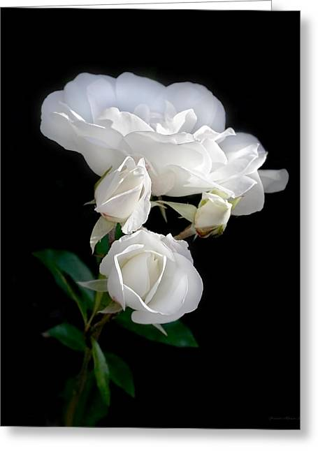 Ivory Rose Greeting Cards - White Roses in the Moonlight Greeting Card by Jennie Marie Schell