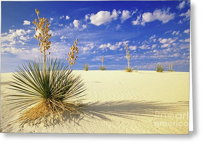 White Sand Blue Sky New Mexico Greeting Card by Bob Christopher