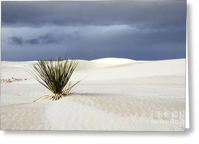 Sand Patterns Greeting Cards - White Sands Dark Sky Greeting Card by Bob Christopher