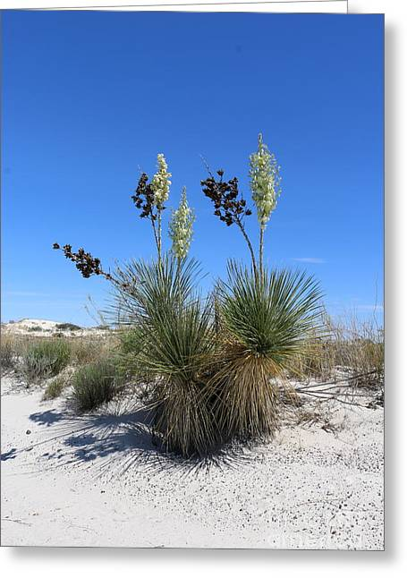 Sanddunes Greeting Cards - White Sands Dune With Soap Yucca Greeting Card by Christiane Schulze Art And Photography